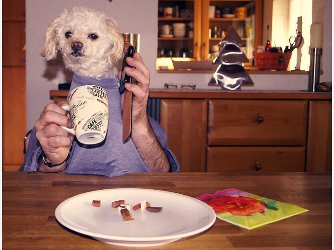 dog dining im yourzz selbstversuch video hund mit armen isst am tisch dog dinner hamm hamm. Black Bedroom Furniture Sets. Home Design Ideas