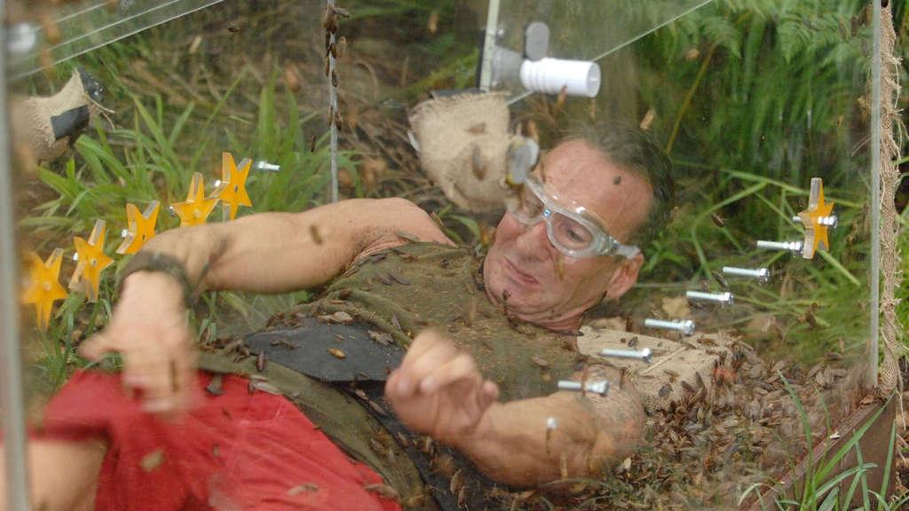 Dschungelcamp 2014 Kakerlaken Kriechen In Jochen Bendels