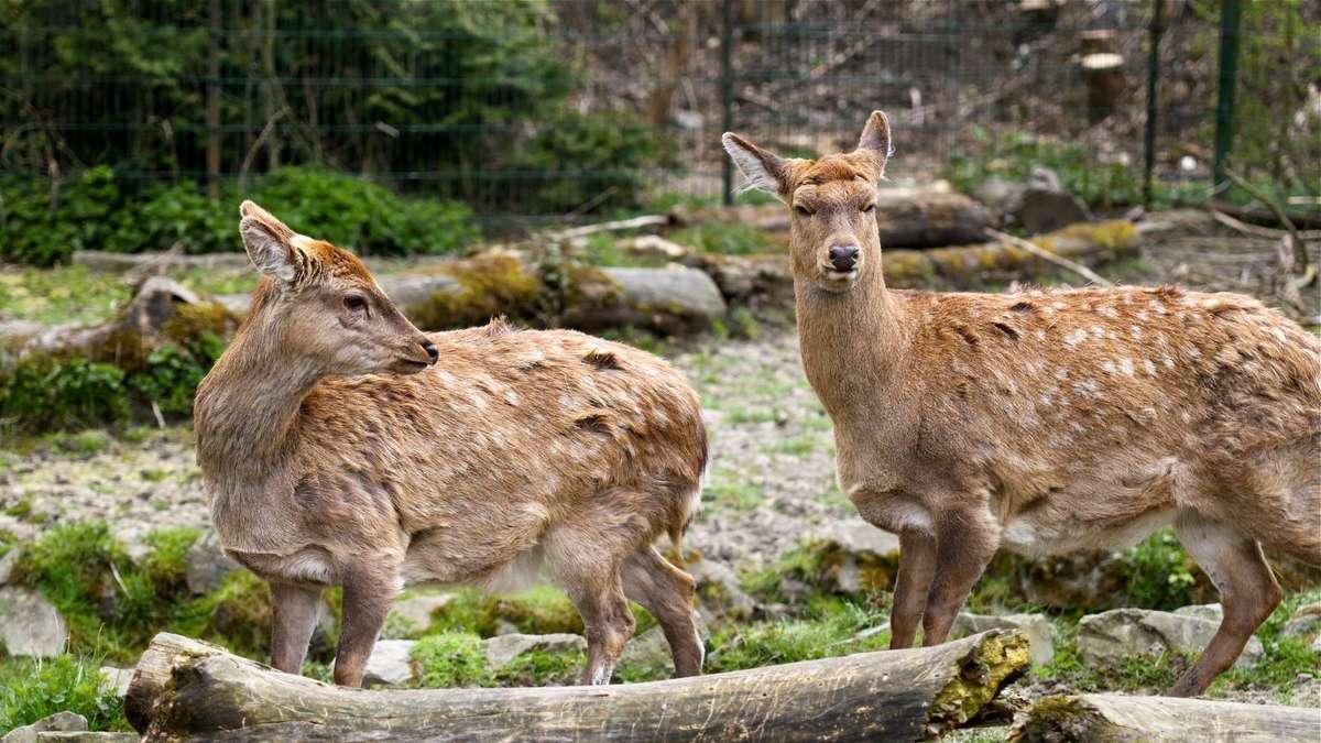 antilopen teilen sich gehege im tierpark hamm hamm. Black Bedroom Furniture Sets. Home Design Ideas