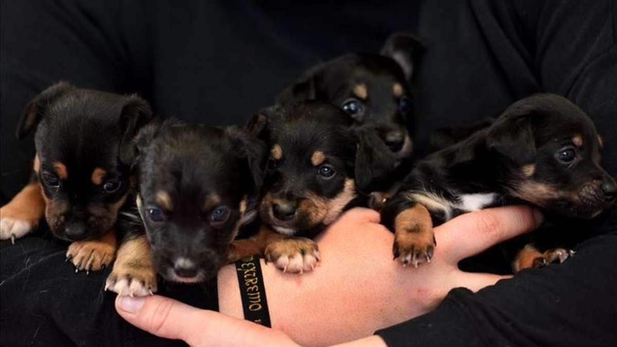 Happy End Fur Sechs Hundewelpen Im Tierheim Hamm Hundin Von