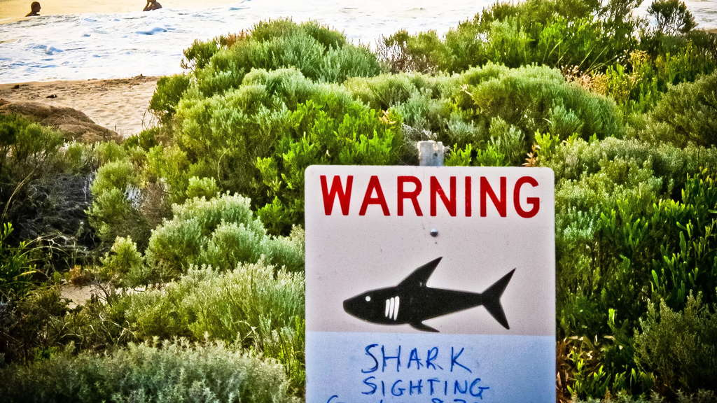 Shark warning in Australia