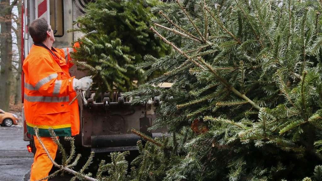 Bvb Weihnachtsbaum.Ash Holt Weihnachtsbäume Ab Alle Termine Für Stadt Hamm Online Hamm