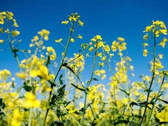 Den Garten Für Künftige Dürreperioden Vorbereiten