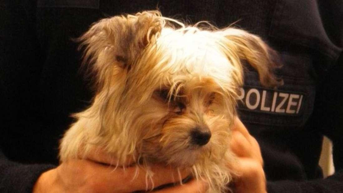 Alleine auf Reisen: Reisende haben am Samstag einen Hundewelpen im Zug von Borgeln nach Hamm entdeckt.